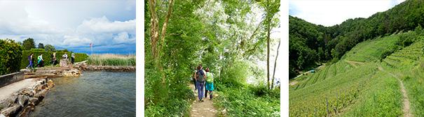 Image de randonnée dans la région de Vully